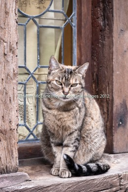 French moggy