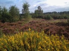 Ferndown Common-005