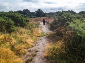Ferndown Common-012
