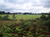 Ferndown Common-016