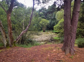 Ferndown Common-021