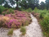 Ferndown Common-022