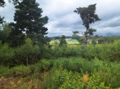 Ferndown Common-024