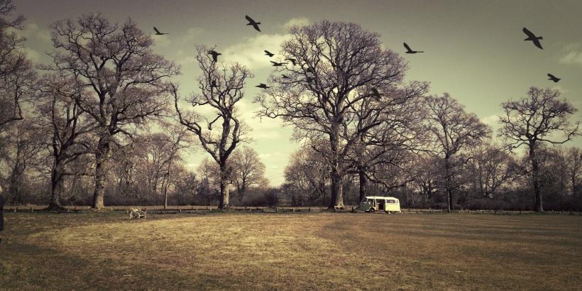 Pamphill Green, Wimborne
