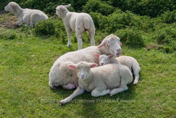 Ewe, ewe, ewe and ewe!!