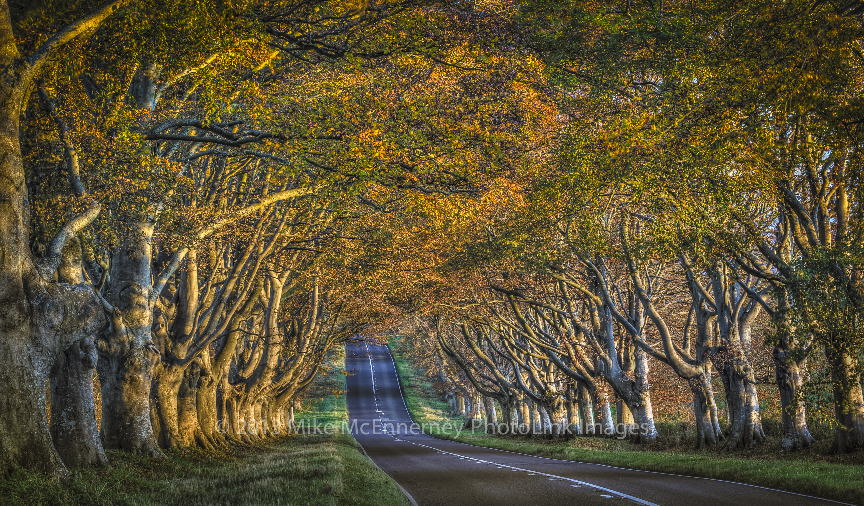 Badbury Rings Wimborne