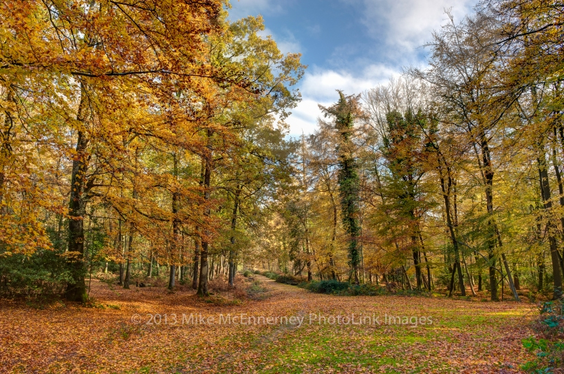 Nomansland, New Forest Hampshire in the Autumn