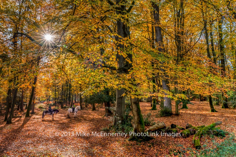 Nomansland, New Forest in Autumn